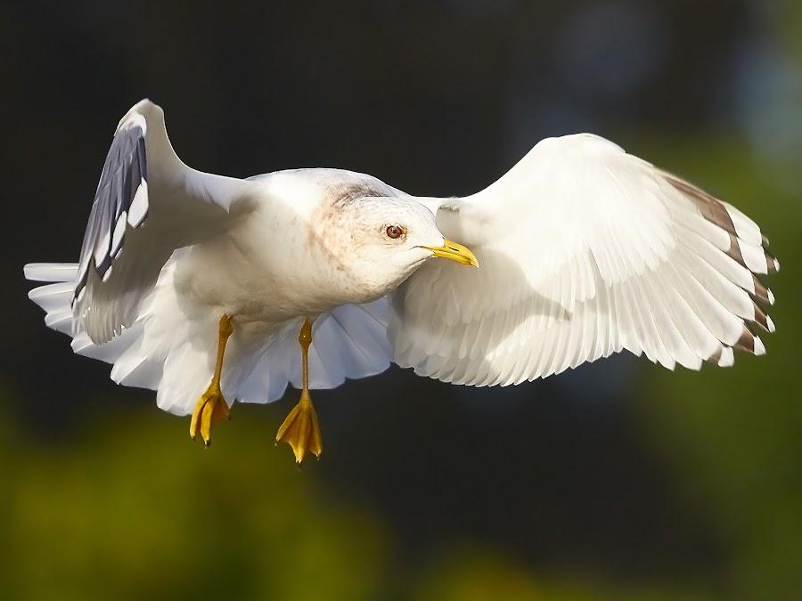 by Raphael RaCcoon - Animals Birds