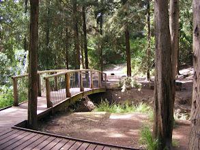 Photo: Мостик в лесу