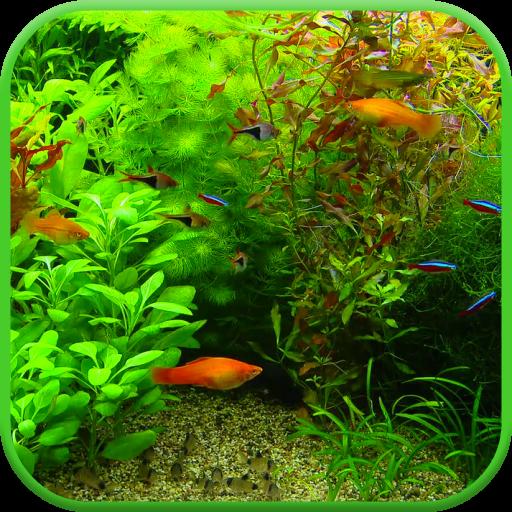 Real Aquarium 3D Wallpaper