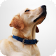 Download Dog Breeds : Origin, history, looks, height etc For PC Windows and Mac