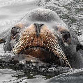 by Brenda Baird - Animals Other Mammals