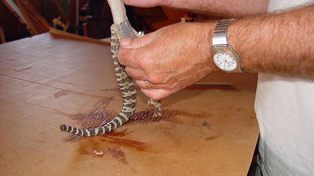 skinning snake
