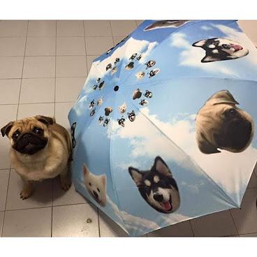 訂制寵物頭像雨傘