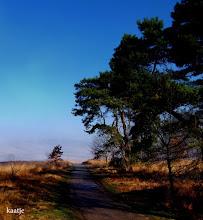 Photo: Natuur Heidelandschap Foto: Kaatje Jansen