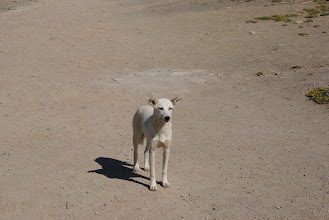 Photo: Dog in Meknes