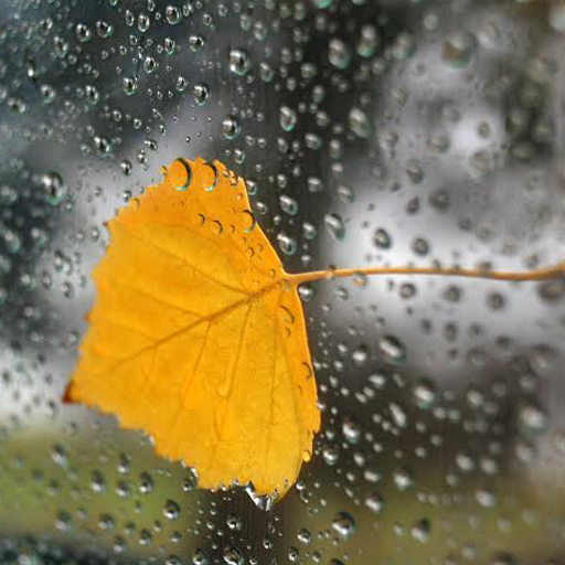 For Xperia Theme Autumn