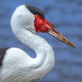 by Judy Rosanno - Animals Birds ( february 2019, san antonio zoo )
