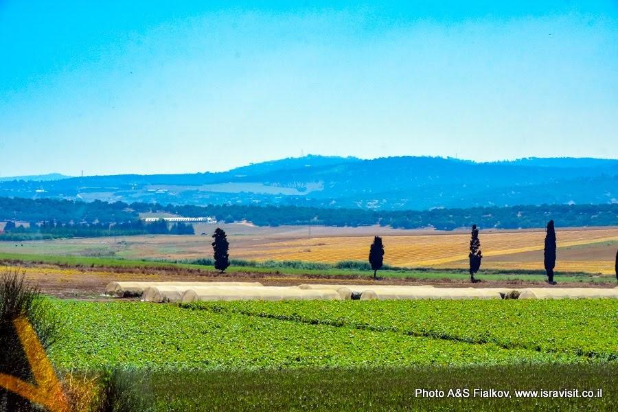 Пейзаж. Плодородная долина Нижней Галилеи. Экскурсия в Израиле.