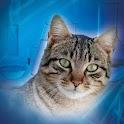 Farmacología Práctica en Gatos icon