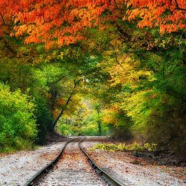 bjh by Brian Hollars - Transportation Railway Tracks ( autumn, railroad, fall, tracks, leaves )