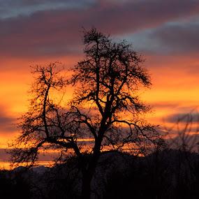 An Alpine Sunset by Stoyan Baev - Landscapes Sunsets & Sunrises ( skyline, sky, tree, silhouette, sunset, landscape, light, sun,  )