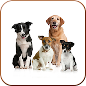 Dog Breeds & Traits