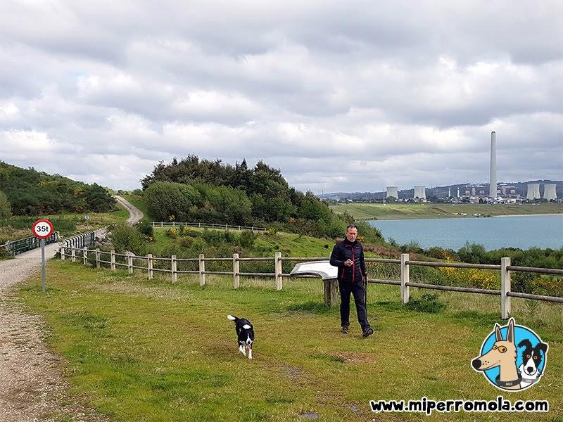 Border Collie en Senderismo con Perro Ruta da Memoria Lago de As Pontes