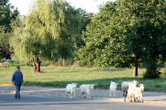 Photo: Day 98 - Bulgarian Herder
