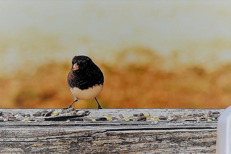 by Norman Abel - Animals Birds