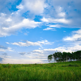 by Daniel Olsen - Landscapes Prairies, Meadows & Fields ( scenic )