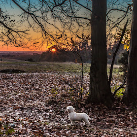 watching the sun go down by Andy Dow - Landscapes Sunsets & Sunrises ( sunset, woods, dog, landscape, walk )