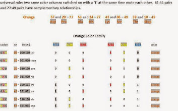 Photo: T/U = 00,    C = 01,    A = 10,    G = 11.  Orange color family codons code for the same amino acids as white color family Hox codons but the patterns and purpose differ.  There is no wobbling, uncertainty or degenerate codons involved here.  Why in every case do member pairs in same color families that code for the same amino acids break out into 81:45 or 77:49 relationships? ----------------------- Note: GAC 57 asp should be 110001 not 101001.