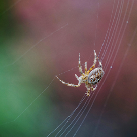 Spider  by Todd Reynolds - Animals Insects & Spiders