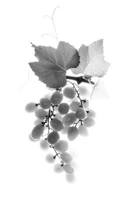 L'uva...bianca di AlfredoNegroni