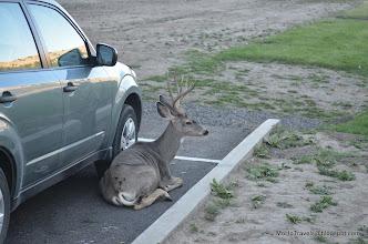 Photo: Wallowa Lake State Park