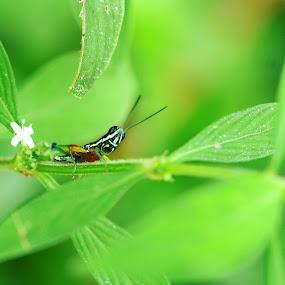 ready to jump by Brilian Tumbelaka - Animals Insects & Spiders