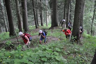 Photo: bonne montée à travers forêt