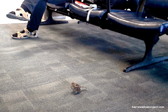 Photo: First bird of the trip, in JFK Airport