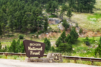 Photo: Bighorn National Forest, full of lodgepole pines