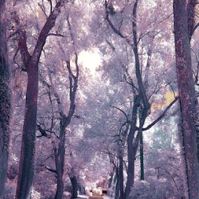 walk in the park by David Ubach - City,  Street & Park  City Parks ( park, infrared )