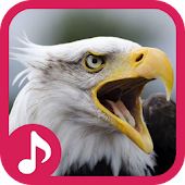 Eagle Sound Effect & Ringtone