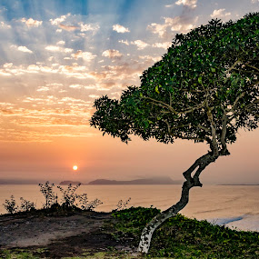 Sunsets and Trees by Fico Stein Montagne - Landscapes Sunsets & Sunrises ( lights, tree, sunsets, cliff, horizon, sea, ocean, nikon d7000,  )