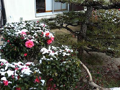 nieve 雪 snow