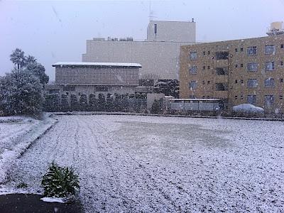 arrozal arroz campo 田んぼ rice field nieve snow 雪