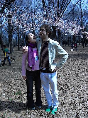 yoyogi 代々木 sakura cerezo flores cherry blossoms 桜 hanami 花見