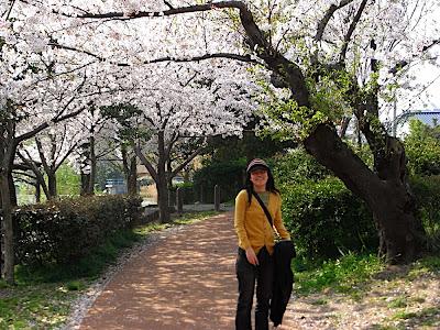 hanami 花見 parque 公園 park ai