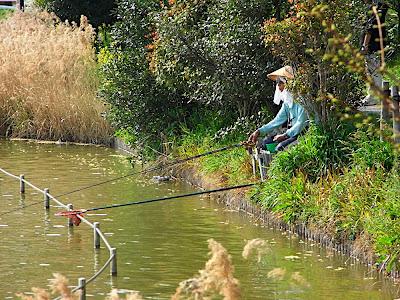 hanami 花見 parque 公園 park pescar つり 釣り fishing