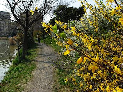 hanami 花見 parque 公園 park camino path 道