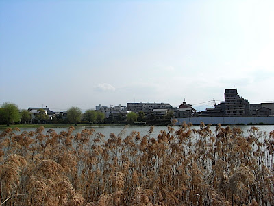 hanami 花見 parque 公園 park estanque 池 pond
