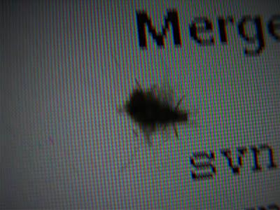 Bicho pelusa — 毛玉虫 — Furball bug