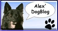 Alex DogBlog