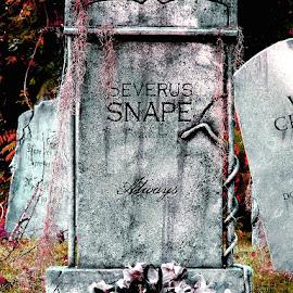Davis Graveyard Halloween Display by Liz Hahn - Public Holidays Halloween