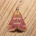 Raspberry Pyrausta -5034