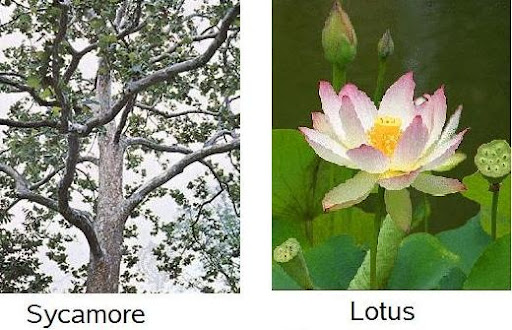 Is Lotus Different From Water Lily Floral Designs By Alka