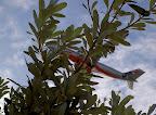 Jetstar A330-200 behind a Banksia bush