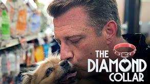 The Diamond Collar thumbnail