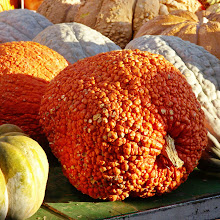 Photo: A highly textured bumpy pumpkin