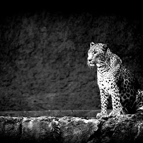 Observing by Barry Allan - Animals Other Mammals