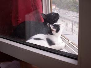 Photo: Okno zabezpieczone siatką na 8 piętrze
