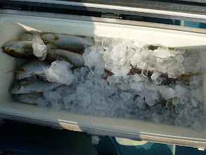 Photo: イノウエさんの釣果 その2